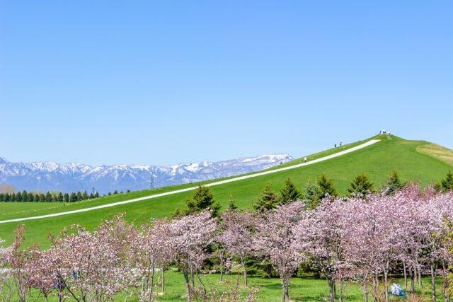 モエレ沼公園の桜