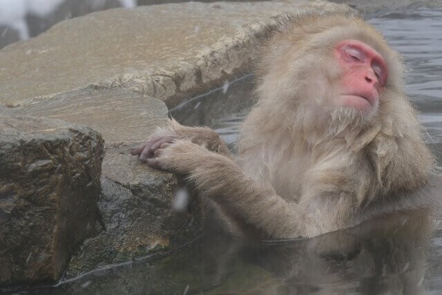 露天風呂の日